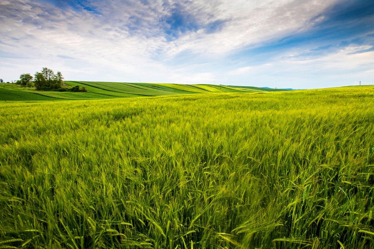 Ugovor o zakupu poljoprivrednog zemljišta | Milan Ivetić Advokat